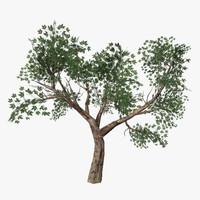obj tree 03