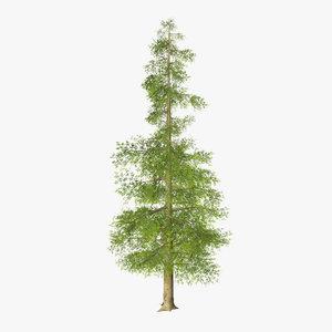 3d model tree 06
