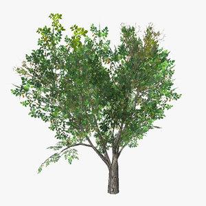 3d tree 12