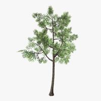 tree 11 3d model