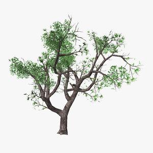 3d model tree 14