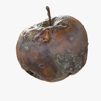 Rotten Decayed Apple 03