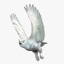 Snowy Owl 3D models