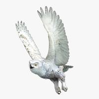 snowy owl 3d model