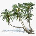 Coconut Palms Set
