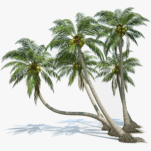 3d coconut palms set plants
