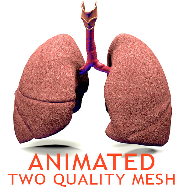 3ds lungs cycle