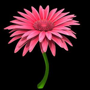 3d pink gerbera model