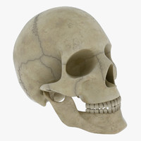 human skull head 3d 3ds