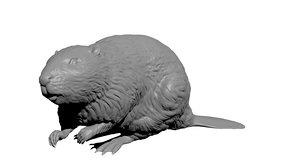 north american beaver 3d obj