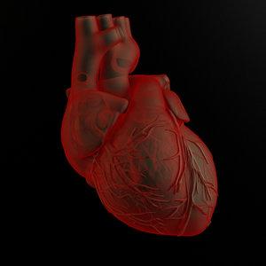 3d model heart body human