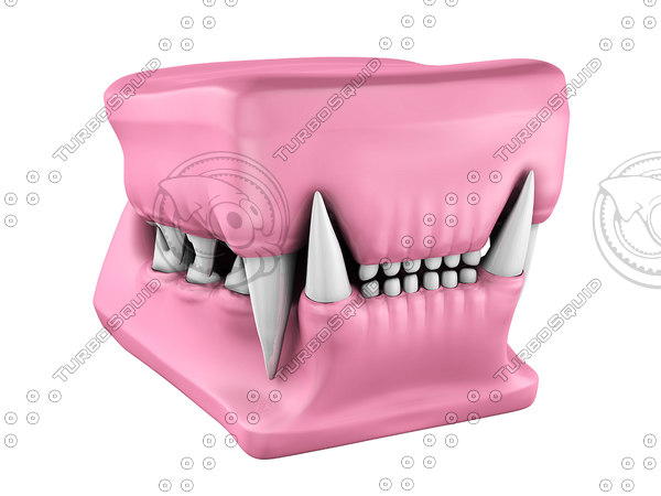 3d cat teeth cast model