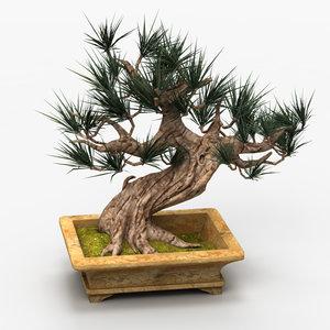 max bonsai tree