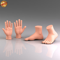 modeled anatomy medical 3d model