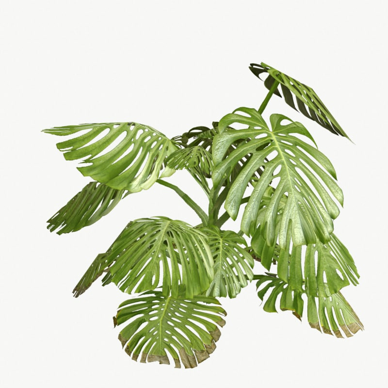 monstera type 1 3d 3ds