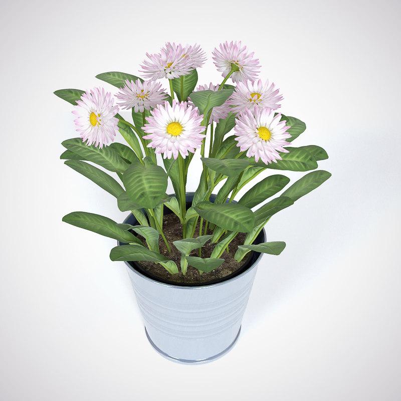 daisy flower 3d max