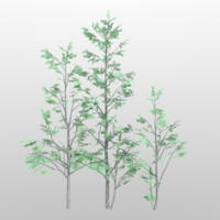 alnus grey alder tree 3d model