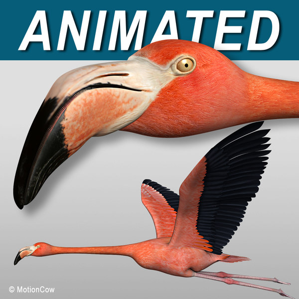 3d model realistic flying flamingo