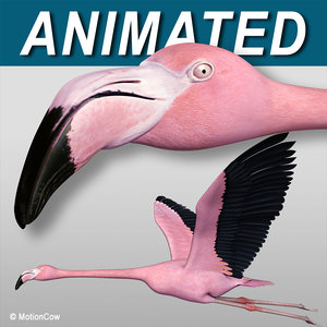 3d realistic flying pink flamingo model