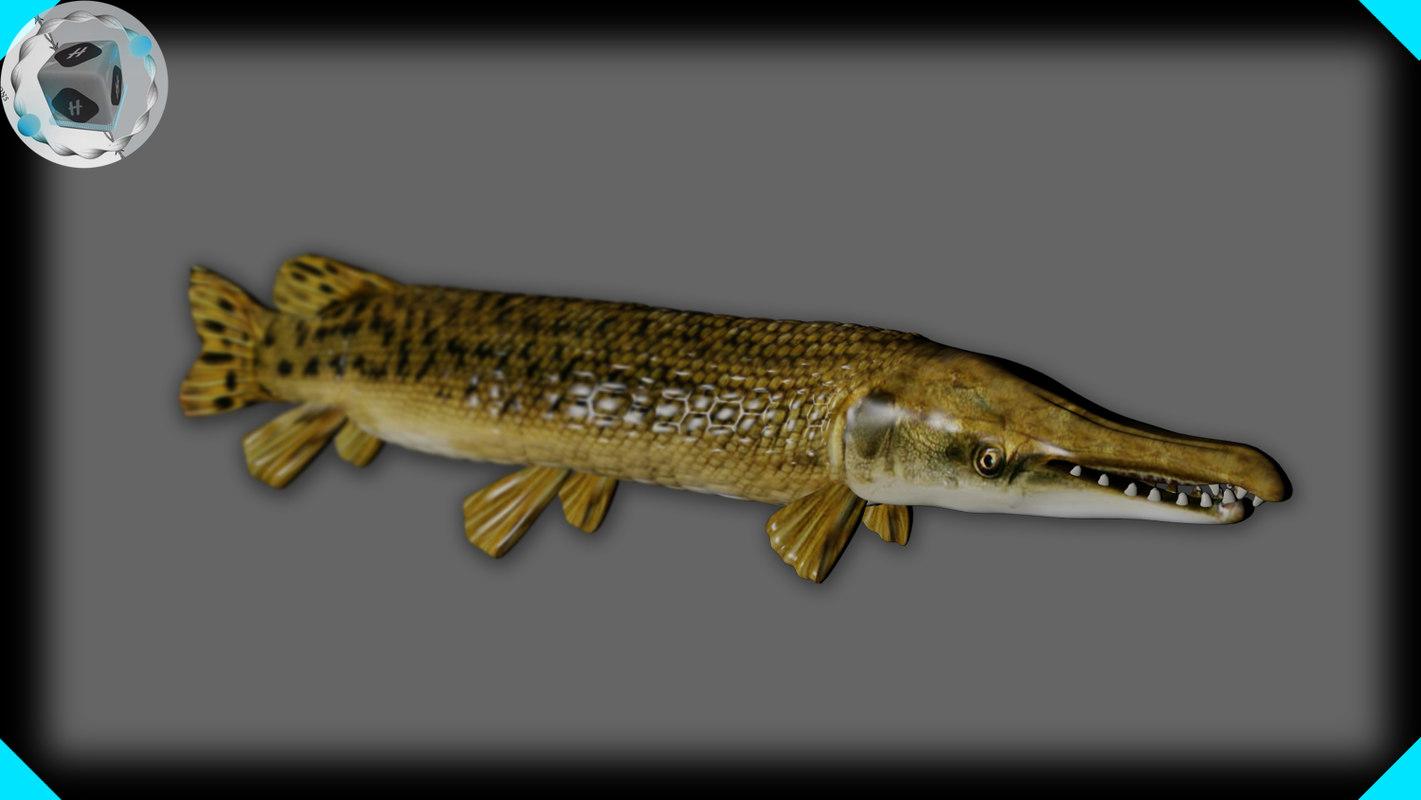 3d alligator gar model