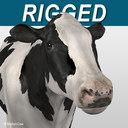 Cow Holstein