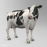 animation cow max
