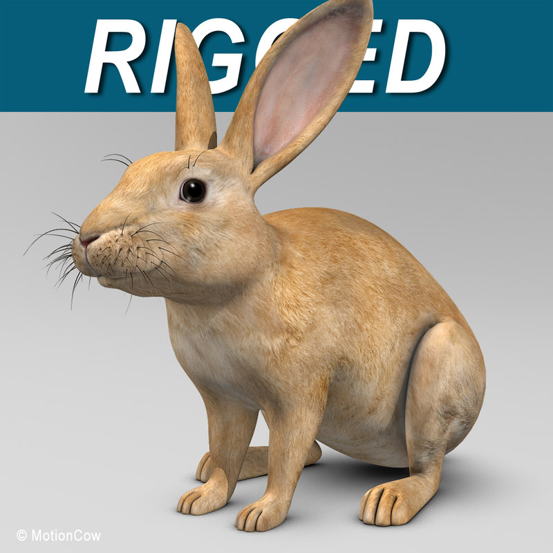 max realistic brown rabbit