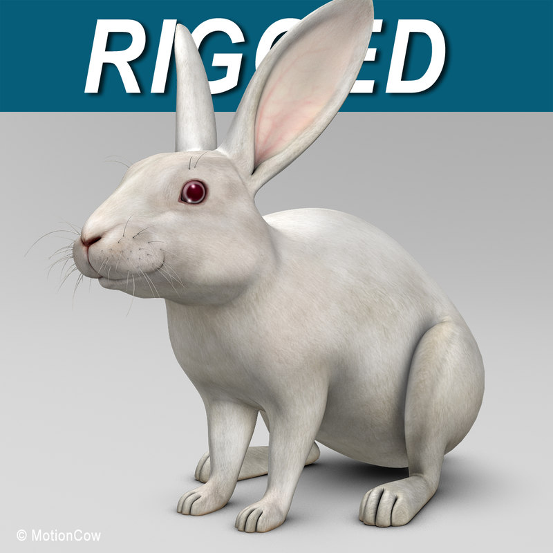 3d realistic white rabbit