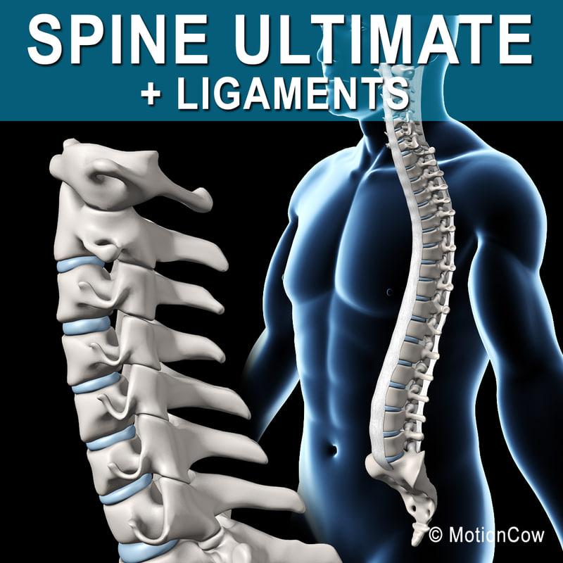 human spine 3d xsi