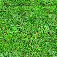 Rough grass 5