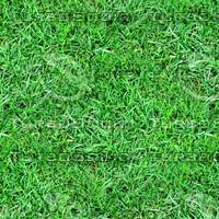 Rough grass 4