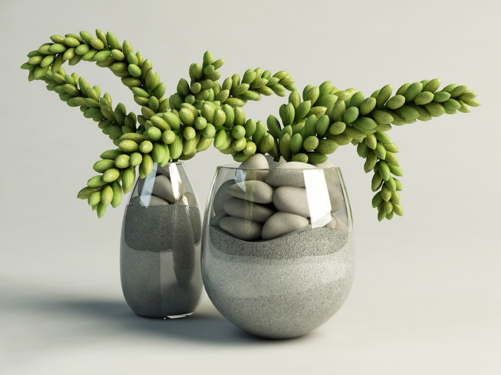 max cactus succulent glass