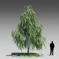 3dsmax birch tree betula pendula