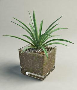 3d model aloe glass pot
