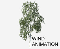 Betula pendula with wind animation