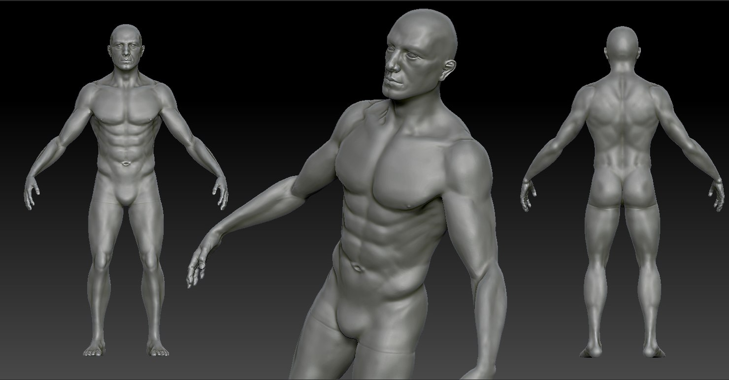 3d model anatomy character