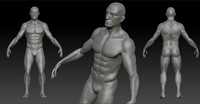 3d model anatomy character