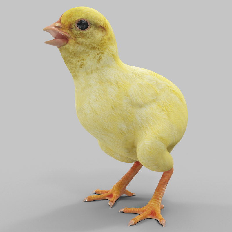 chick modeled 3d max