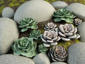 3d cactus landscape design
