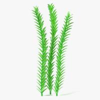 Aquatic Plant1