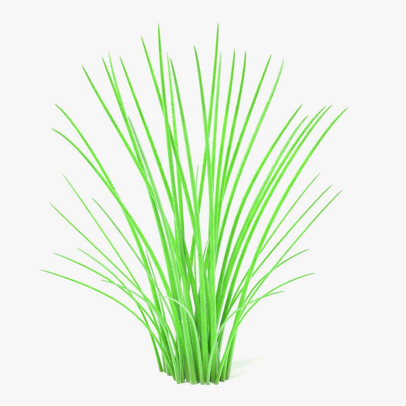 3ds aquatic plant