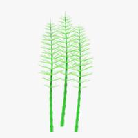 Aquatic Plant4