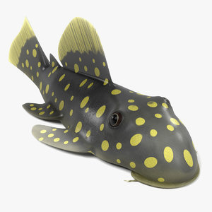 baryancistrus xanthellus 3d 3ds