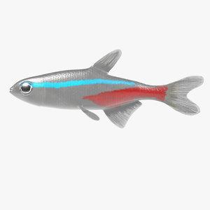 3d model paracheirodon innesi