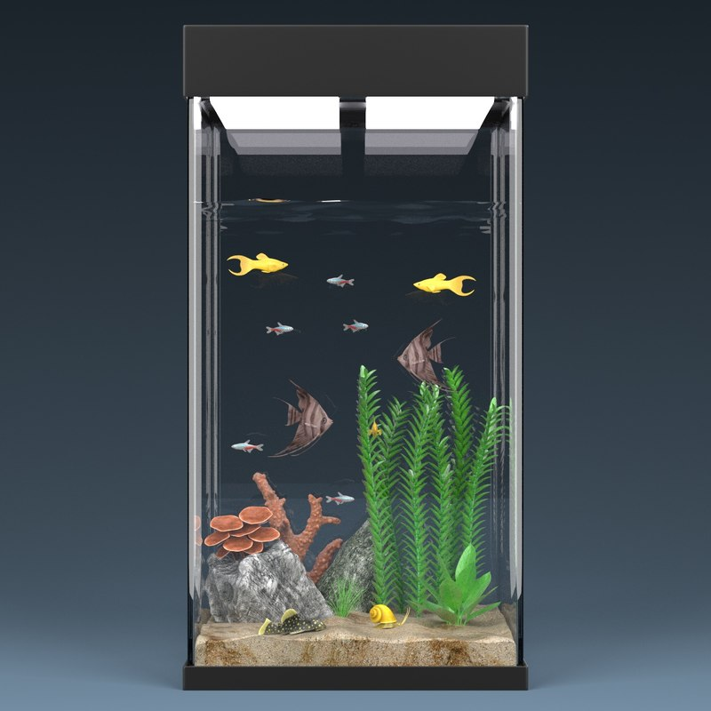 maya aquarium equipped decorations. Black Bedroom Furniture Sets. Home Design Ideas