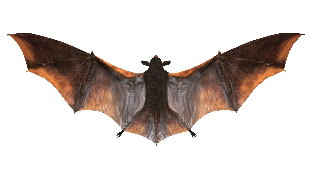 obj bats mammals wings