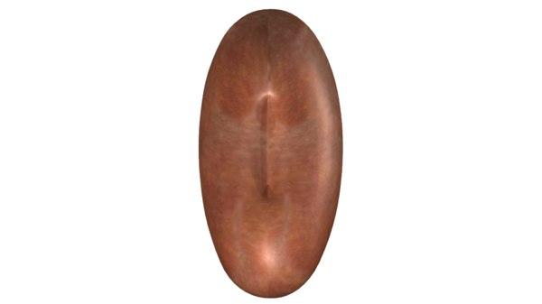 bean cotyledons obj