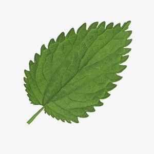 3d crenate leaf modeled nature