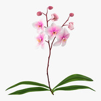 3dsmax orchid modeled