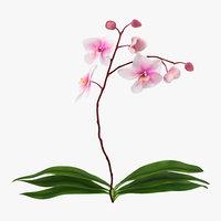 orchid 2 c4d
